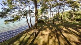 Birfhouse op de boom in de kust bosantenne, 4k stock video
