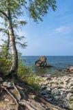 Birke auf dem Ufer vom Baikalsee Stockbild