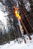 Birke auf Feuer nachher nach einem Blitz Lizenzfreie Stockfotografie