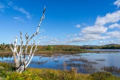 Birke auf Fluss Lizenzfreie Stockbilder