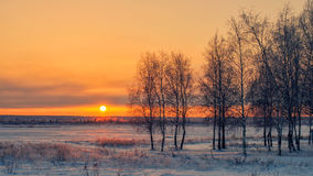 Birke bei Sonnenuntergang im Winter Stockbilder