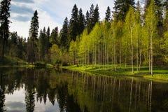 Birke Grove reflektiert in einem See stockbilder