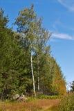 Birke im Wind Lizenzfreie Stockbilder