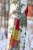 Birke mit einem Schal stockbild
