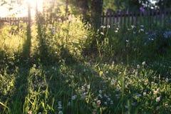 Birke und Gras auf Sonnenunterganglandschaft Lizenzfreie Stockbilder