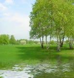 Birken auf dem Seeufer Lizenzfreies Stockfoto