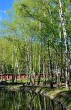 Birken auf der Bank von einem Teich in einem allgemeinen Park Stockfotos