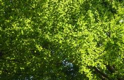 Birken-Baum-Kabinendach stockfoto