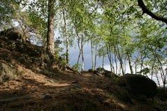 Birken in der böhmischen Schweiz Stockfoto