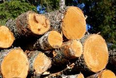 Birken-Holz-Protokolle Stockbild