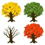 Birken mit orange Blättern