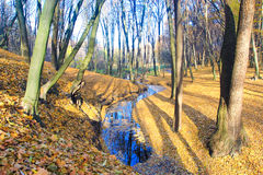Birken mit orange Blättern Lizenzfreies Stockfoto