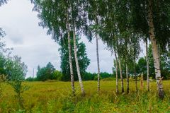 Birken am Rand des Feldes im Dorf Das Foto war eingelassenes Lettland stockbilder