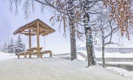Birken und Schnee Stockbild