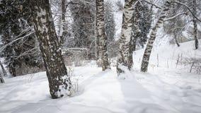 Birken und Schnee Stockfotografie
