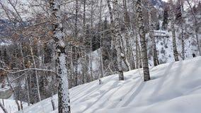Birken und Schnee Stockfotos