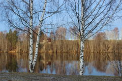 Birken und Wasserspiegel Lizenzfreies Stockfoto