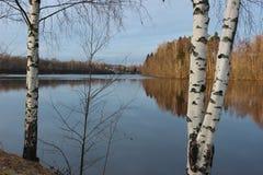 Birken und Wasserspiegel Stockfotos