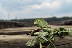 Birkenau van Auschwitz stock afbeelding