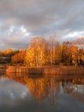 Birkenbäume und ihre Reflexionen auf Sonnenaufgang Lizenzfreie Stockbilder