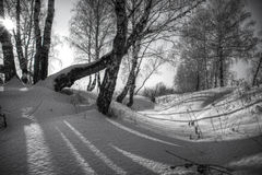 Birkenbäume und Schatten von ihnen im Schnee stockfoto