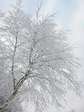Birkenbaum im Frost Lizenzfreie Stockbilder
