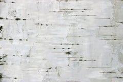 Birkenbeschaffenheitshintergrund stockfoto