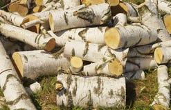 Birkenbrennholz im Haufen aus den Grund Stockfoto