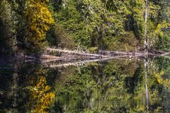 Birkenhead湖的完善的静止在吹口哨和彭伯顿附近的, BC创造黄色和绿色反射 库存照片