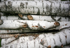 Birkenholz stockfoto