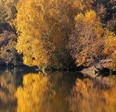 Birkenholz im Herbst Lizenzfreies Stockfoto