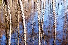 Birkenreflexion auf Wasser Stockbild