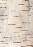Birkenrinde Stockbilder