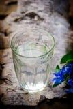 Birkensaft in einem Glas Stockbild