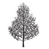 Birkenschattenbild mit Blättern Lizenzfreie Stockbilder