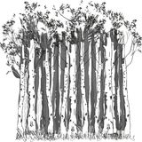 Birkenwald Stockbild