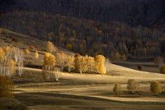 Birkenwald im Herbst Lizenzfreie Stockfotografie