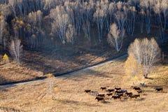 Birkenwald im Herbst Lizenzfreie Stockbilder