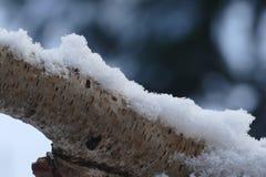 Birkenzweig mit Schneeabdeckung Stockbild
