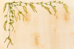 Birkenzweige breiteten nach links und Spitze auf Birkenfurnier-blatt aus Lizenzfreies Stockbild