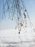 Birkenzweige gegen den blauen Himmel Stockbilder