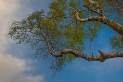 Birkenzweige im Himmel Stockfotografie