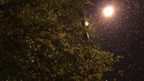Birkenzweige mit Blättern auf dem Hintergrund eines Laternenpfahls und des Schneeregens stock footage