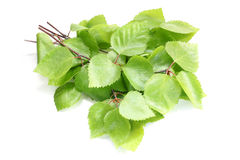 Birkenzweige mit grünen Blättern Lizenzfreie Stockfotografie