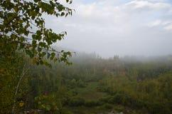 Birkenzweige und junge Bäume - Steinbruch Lizenzfreie Stockfotos