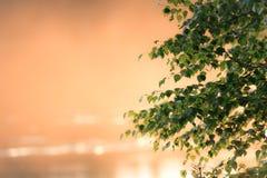 Birkenzweige und Sonnenunterganglicht Lizenzfreie Stockbilder