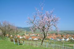 Birkweiler,german Wine Route,Germany Stock Photography