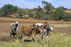 Birmański rolnictwo - Myanmar zdjęcia stock
