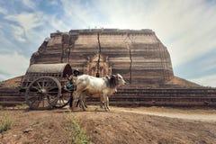 Birmański wiejski mężczyzna jedzie drewnianą furę Obrazy Stock