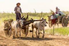 Birmańscy ludzie jedzie oxcart Obraz Royalty Free